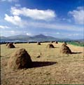 Hay stacks, Dingle Peninsula, County Kerry, Ireland