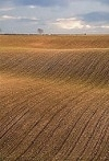 Arable field with furrow lines