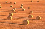 Field of circular straw bales